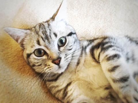 社猫のトト