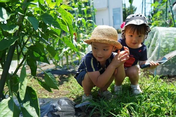 「畑で楽しむ週末」を提供するシェア畑のプロモーション戦略の立案・実行